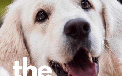 The Safest Solution For Pet Urine Removal